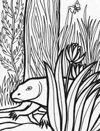 endangered species coloring pages rainforest colotring pages
