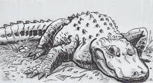 alligator defenses drained for eggshells u0027 assembly u2013 a new biology