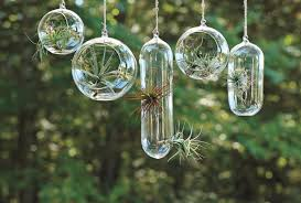 hanging air plant terrarium houzz