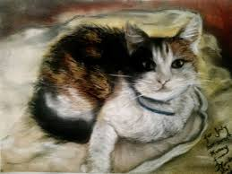 mona cat my friend u0027s cat honey soft pastel drawing by mona croll on