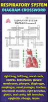 respiratory system crossword puzzle activity shelter educative