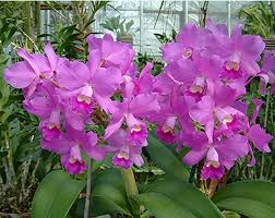 orchid plants for sale botanical gardens offer orchid sale winter tour city