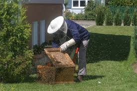 Backyard Beehive How To Make Your Own Beehive A Step By Step Guide To Make A Beehive