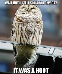 Funny Owl Meme - hoot day funny pictures