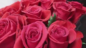 roses for valentines day giving roses this s they ve traveled 2 500 for