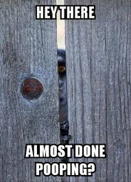 Bathroom Stall Meme - funny animal pictures of the day 24 pics