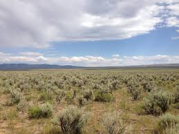 native idaho plants western native seed regional native wildflower and grass seed mixes
