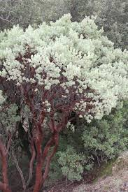 Pink Spring Flowering Shrubs - a guide to choosing and caring for flowering shrubs