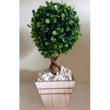 buxus sempervirens in vaso vaso planta buxinho casa m祿veis e decora礑磽o no mercado