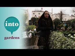 Plants For Winter Window Boxes - winter window boxes choosing the plants with laetitia maklouf