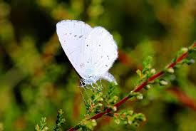 white butterfly spiritual meaning butterflies just cause i