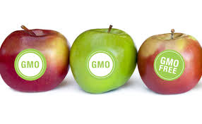 What Are Gmos Lets Go Gmo
