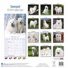 american eskimo dog giving birth samoyed calendar 2018 calendar club uk
