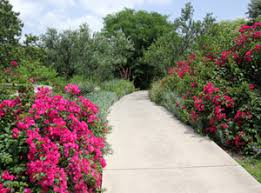 san antonio botanical garden u2013 master gardener program