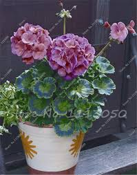Winter Flowers For Garden by Flowering Plants For Office Picture More Detailed Picture About