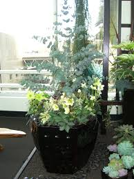 113 best cool containers images on pinterest plants gardening