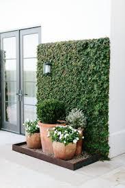 best 25 ivy wall ideas on pinterest ivy wall trellis and