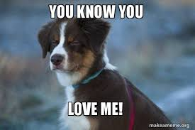 Unsure Meme - you know you love me unsure dog make a meme