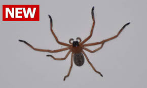 I Tried Killing A Spider - how to get rid of spiders how to kill spiders how to kill a spider