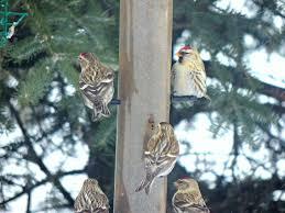 fabrication mangeoire oiseaux quelle mangeoire pour commencer go oiseaux
