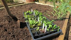 Building A Raised Vegetable Garden by A Complete Guide To A Raised Bed Vegetable Garden Building