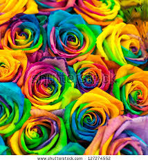 Colored Roses Bouquet Colored Roses Rainbow Rose Stock Photo 127274552