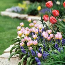 garten anlegen ideen ideen gartengestalten garten anlegen rosa tulpen garten
