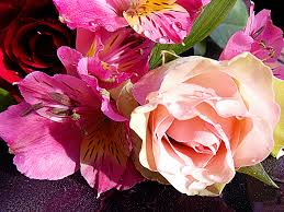 Nice Flowers Picture Album Called U0027nice Flowers U0027 45516 Uploaded By Binder1