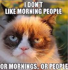Cool Cat Meme - cool cat memes tumblr grumpy cat meme tumblr kayak wallpaper