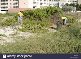 native florida plants miami beach florida city remove non native plants from manmade