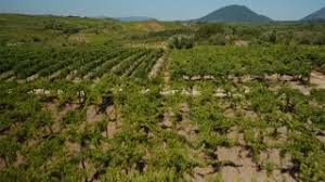 Trellis Wine Aerial Drone Fields Planted With Vineyards About Wine Fruit