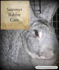 summer rabbit care farming my backyard
