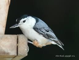 New England Backyards by Landscaping For Birds Birds Of New England Com