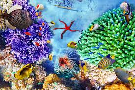best diving and snorkeling in belize belize destination guide