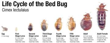 Bed Bug Com Bedbug Solutions For Hotels Applied Science Labs 619 825 2121