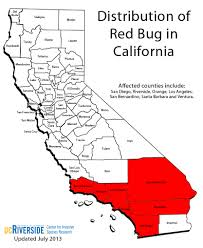 Pictures Of Tiny Red Bugs by Cisr Red Bug