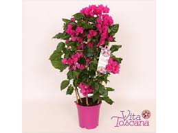 Tropical Climbing Plant - turning up the heat it u0027s the hottest september since 1911