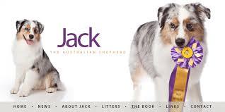 australian shepherd rescue las vegas jack the australian shepherd jack x sha la la litter