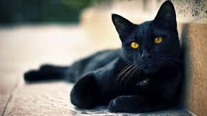 halloween kitten background 1920x1080 black cat wallpapers hd wallpapers pulse