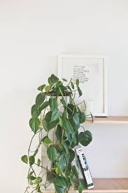 indoor plant guide blackbird