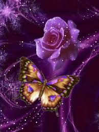 roses images butterfly and wallpaper and background photos