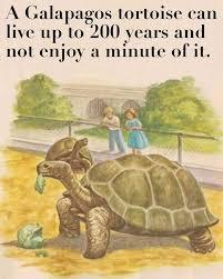 Tortoise Meme - the best tortoise memes memedroid