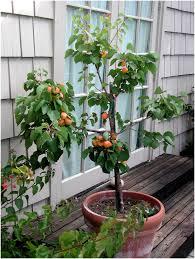 fruit and vegetable backyard garden champsbahrain com