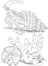 free printable sea life coloring pages 92 best coral room images on pinterest coloring sheets