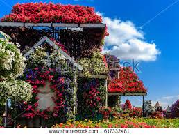 flower house dubai uae january 5 2017 dubai stock photo 617332460