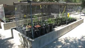 Native Plant Nursery Los Angeles Ca Hahamongna Nursery Arroyo Seco Foundation