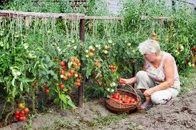 kitchen gardening ideas how cultivating an kitchen garden bring positivity to your