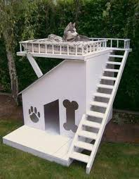 cool dog houses that s not a dog house this is a dog house doggies house and