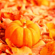 autumn pumpkin wallpaper widescreen most viewed free ipad wallpapers my hd wallpapers com page 18