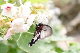 free stock photo of animal butterfly desktop backgrounds